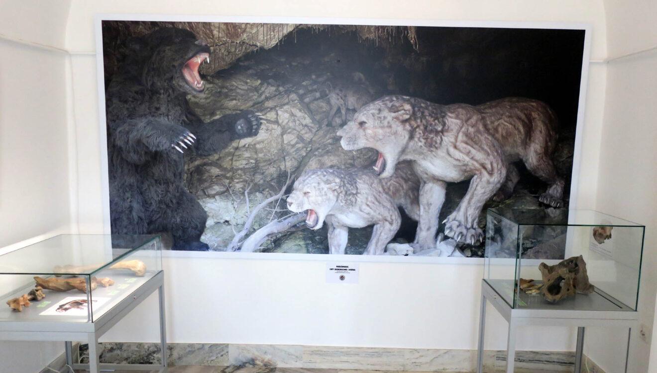 Fragment wystawy. W tle ekspozycja z jaskini niedźwiedziej.